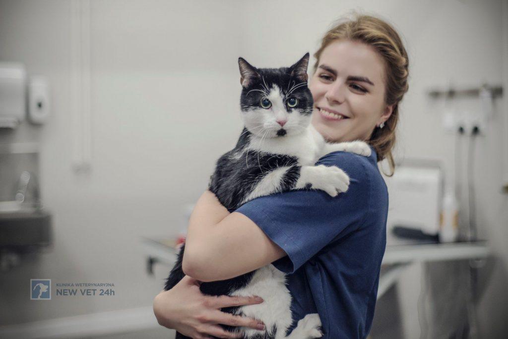 Szpiczak mnogi u kota – opis przypadku klinicznego kliniki NEW VET 24H