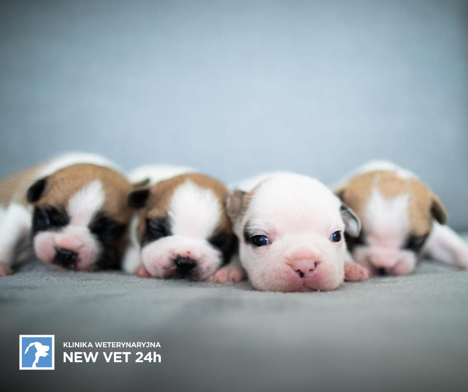 Zapadła decyzja – chcemy psa! Wybór naszego nowego członka rodziny mamy szeroki.